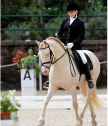 allie usef website picture