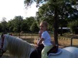 Allison trotting