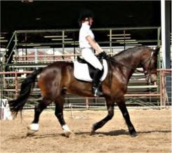 lacy and brenin trot